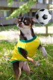 Pies i piłka nożna Zdjęcie Stock