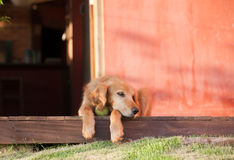 Pies i piłka Obrazy Royalty Free
