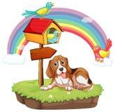 Pies i ptaki Zdjęcia Stock