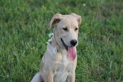 Pies i stokrotka Fotografia Royalty Free