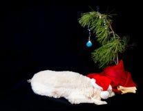 Pies i swój choinka Zdjęcia Royalty Free