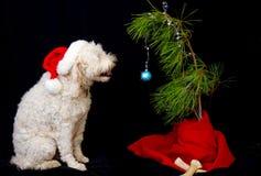 Pies i swój choinka Obraz Stock