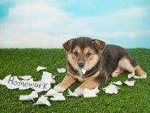 Pies jadł mój pracę domową Zdjęcia Stock