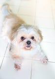 Pies jak pragnienie bawić się Fotografia Stock