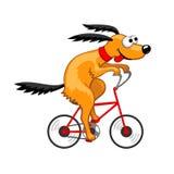 Pies jedzie bicykl Zdjęcie Stock