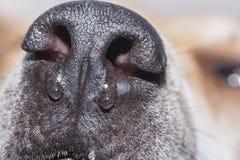 Pies jest chory i zimny Fotografia Stock
