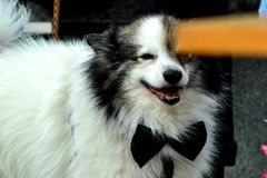 Pies Jest Galanteryjny fotografia royalty free