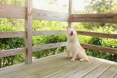 Pies jest na ganeczku Obraz Royalty Free