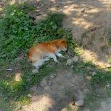 Pies jest odpoczynkowy na ulicie, w górę zdjęcie stock