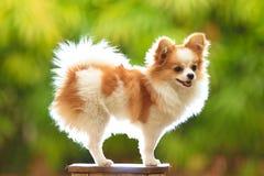 pies jest portret Obrazy Stock