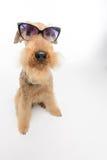 Pies jest twój najlepszym przyjacielem Fotografia Stock