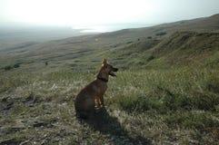 Pies jest w polu Szczeniak uroczy Męski pies w parku zdjęcie stock