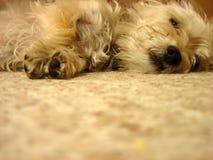 pies jest zmęczony Obrazy Royalty Free
