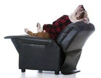 pies jest zmęczony Zdjęcia Royalty Free