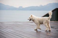 Pies jeziorem fotografia stock