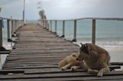 Pies kłama puszek Obraz Royalty Free