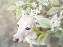 Pies, kwiaty, smutni Fotografia Stock