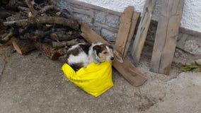 Pies lubi spać w torbie Zdjęcie Stock
