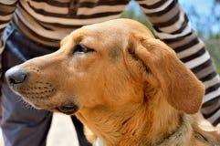 Pies mój najlepszy kamrat Zdjęcie Royalty Free