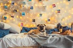 Pies na łóżku w sypialni no dekorował żadny ludzi Fotografia Stock