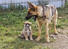 Pies na łańcuchu i jej szczeniaku W jardzie Obrazy Royalty Free