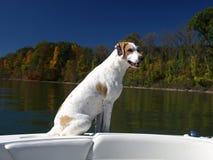 pies na łodzi Fotografia Royalty Free