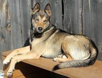 Pies na ławce Zdjęcie Stock