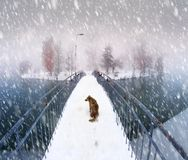 Pies na bridżowym Ivano-Frankovsk Fotografia Royalty Free