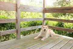 Pies na ganeczku Zdjęcia Royalty Free