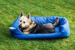 Pies na jego łóżkowej, zielonej trawy tle, Obraz Royalty Free
