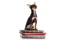 Pies na książkach odizolowywać na białym tle Obrazy Stock