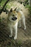 Pies na ostrzeżeniu Zdjęcie Stock