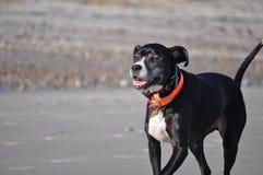 pies na plaży szczęśliwy zdjęcia royalty free