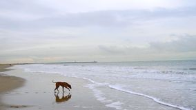 Pies na plaży Zdjęcia Royalty Free