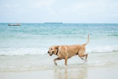 Pies na plaży obrazy stock