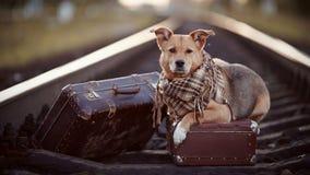 Pies na poręczach z walizkami Zdjęcie Royalty Free