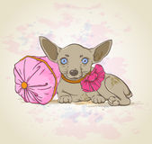 Pies na różowej poduszce Zdjęcia Royalty Free