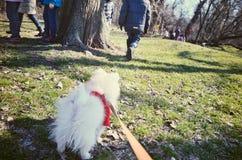 Pies na smyczu patrzeje z przykrością po odjeżdżanie chłopiec od go Obraz Stock