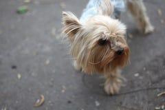 Pies na spacerze obraz royalty free