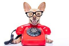 Pies na telefonie Zdjęcie Royalty Free
