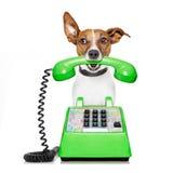 Pies na telefonie zdjęcia royalty free