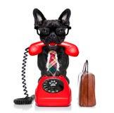 Pies na telefonie fotografia royalty free