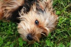 Pies na trawie Zdjęcia Royalty Free