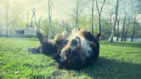 Pies na trawie w wiosna parku zbiory