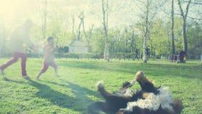 Pies na trawie w wiosna parku zdjęcie wideo