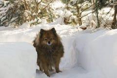 Pies na ulicie Mężczyzna ` s najlepszy przyjaciel Spacery w naturze Piękny zwierzę Obrazy Royalty Free