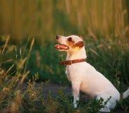pies na zewnątrz Fotografia Stock
