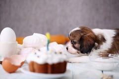 Pies obwąchuje tort Obraz Stock