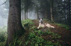 Pies odpoczywa na ścieżce w lesie obrazy royalty free