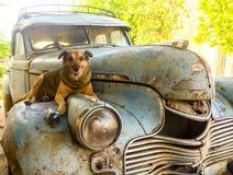 Pies odpoczywa nad starym ośniedziałym samochodem Fotografia Royalty Free